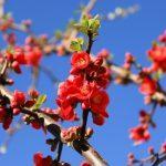 Pomladna utrujenost - kako jo premagati?